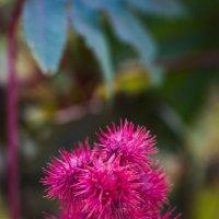 Чудо-растение :: Денис Мартьянов