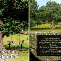 500-летний дуб :: Ольга Андриенко