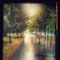 после дождя :: Александр 6769