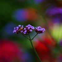Разноцветье :: Геннадий Коробков