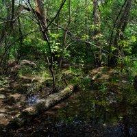Лесов таинственная сень... :: Лидия Цапко