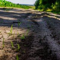 Тропка в лес :: Dmitry Bulanov