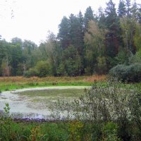 На болоте топком, на лесной трясине.... :: Валентина ツ ღ✿ღ