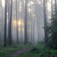 Лесные тихо тают сны... :: Лесо-Вед (Баранов)