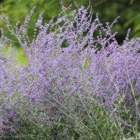 травы... :: Olga