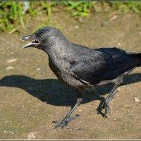 спешу! :: linnud