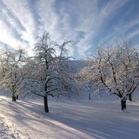 Зима. :: Анна