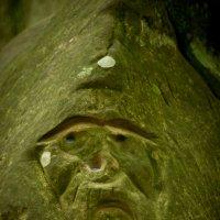 Лицо лесного духа :: Ольга Пуковецкая