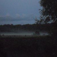 туман :: Anastasiya Shvezcova