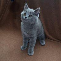 Моя  кошка Ася :: Лера Пхенда