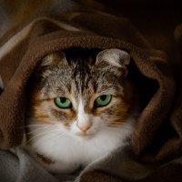 Cat :: Алина Бобкова