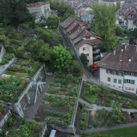 Берн. Огороды в центре столицы Швейцарии :: Елена Смолова