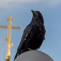Чёрный ворон :: Sergey Kuznetcov