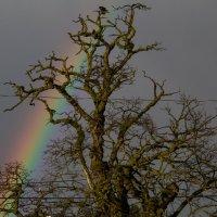Старое дерево :: Olga Udo