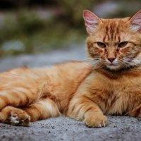 Можете звать меня просто Tiger :: Elena Peshkun