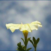 Устремляясь в небеса :: Лидия (naum.lidiya)