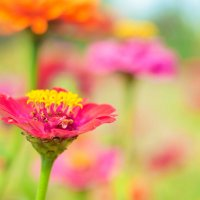 Цветик :: Сергей Томашев