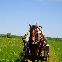 Лошадь :: Алена Бушевая