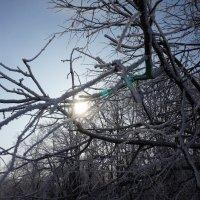Зимнее утро :: Элла Чуксина