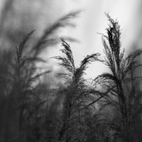 Травы..... :: Валерия  Полещикова
