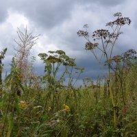 Травы. :: Oleg4618 Шутченко