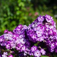 Цветут цветы :: Андрей Мирошниченко