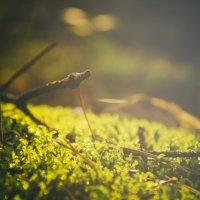 Природа :: Андрей Дыдыкин