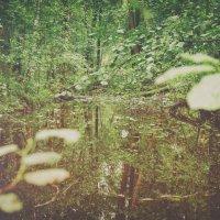 Природа :: Dark Bercut