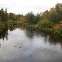 Ранняя осень на реке Оредеж. :: Виктор Елисеев