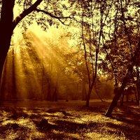 Солнечный поток :: Евгений Юрков