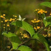 Бабочка и тень :: Елена Ахромеева