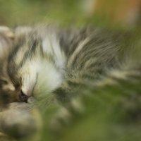 Я завел котенка :з :: Настя Кот