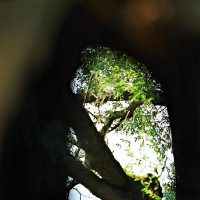 Глазами совы :: Михаил Лобов (drakonmick)