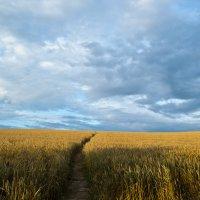 пейзаж :: Антон Новицкий