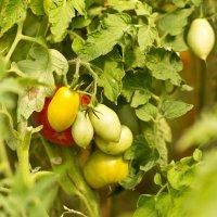 урожай :: Андрей Семенов