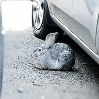 Кролик на стоянке :: Андрей Кузнецов