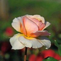 Нежно розовая :: НАТАЛИ natali-t8