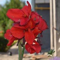 цветок) :: Никита Сапронов