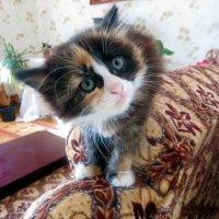 Страшнее кошки зверя нет :: Liliya Kharlamova