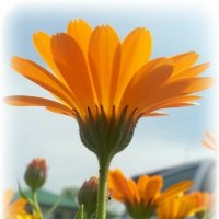 оранжевое небо :: Лариса Добрякова