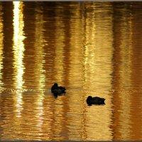 Золотые купания :: Igor Khmelev