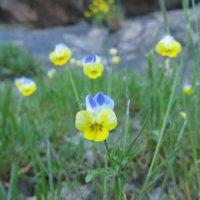 такие маленькие-большие цветы :: Екатерина Мовчан
