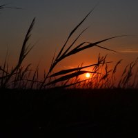 Восход Cолнца. :: Оля Ля