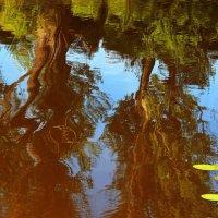 Волнуемы мелодией теченья... :: Лесо-Вед (Баранов)