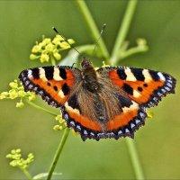 Душа на бабочку похожа :: Валентина *