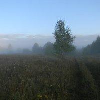 Утренний туман :: Олег Романенко
