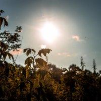 Вечернее солнце :: Юлия Плескач