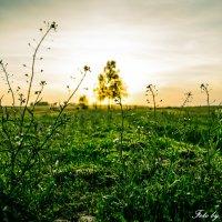 Травушка-муравушка :: Сергей Юдин