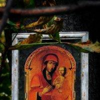 Лесная Икона Божией Матери :: Владимир Бровко