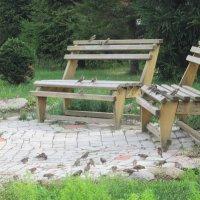 Птичьи посиделки у храма . :: Мила Бовкун